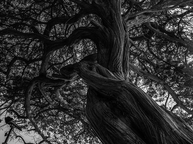 tree-892242_640
