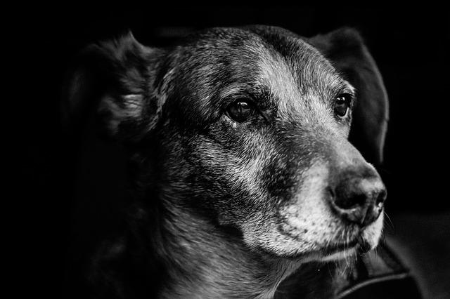 dog-903213_640