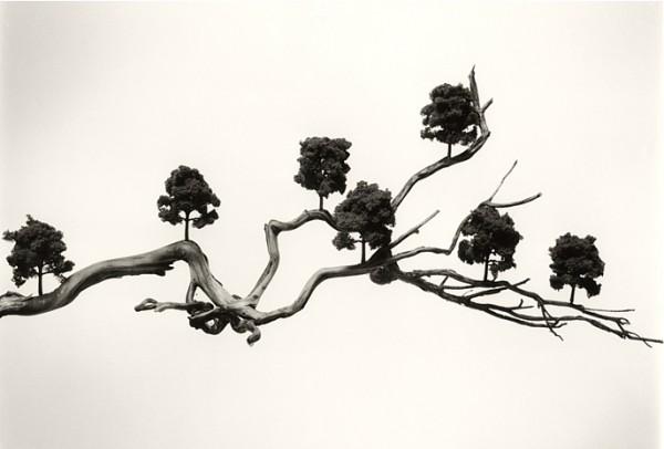 Chema-Madoz-Tree