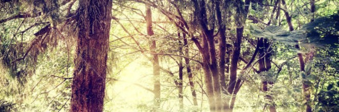 cropped-stock-photo-vintage-nature-background-114702508.jpg